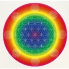 Rainbow Light– Energy, Enzymes and Protein Powder